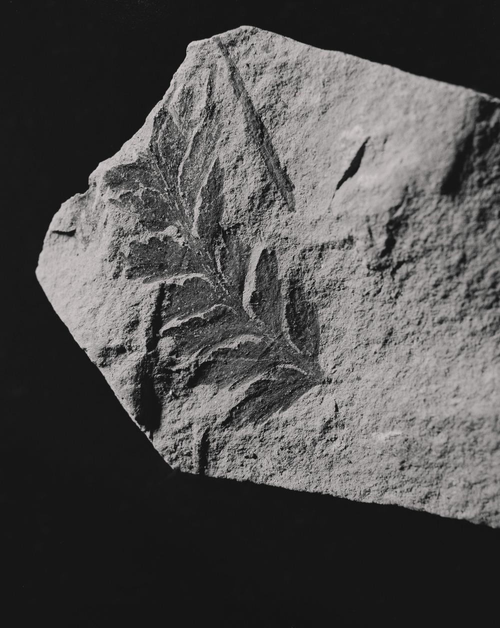 Casey Moore Natures Negatives Fossils-16.jpg