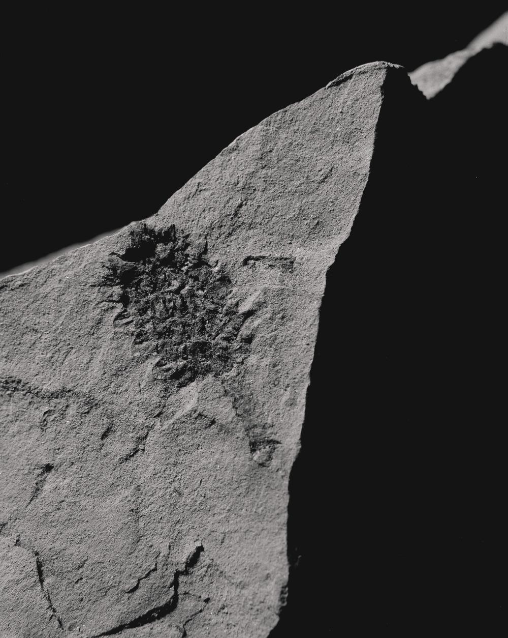 Casey Moore Natures Negatives Fossils-6.jpg