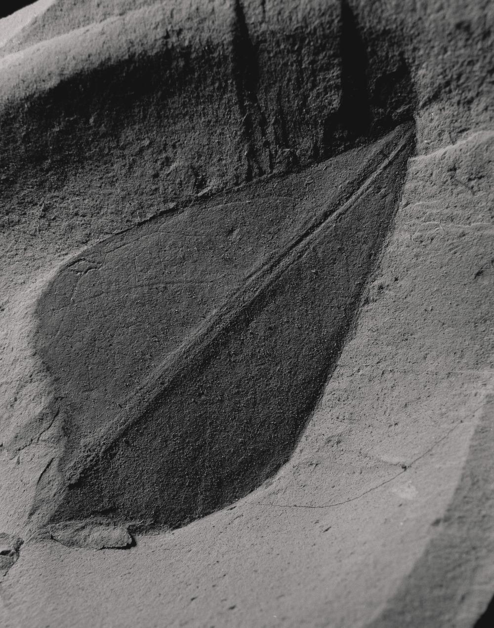 Casey Moore Natures Negatives Fossils-12.jpg