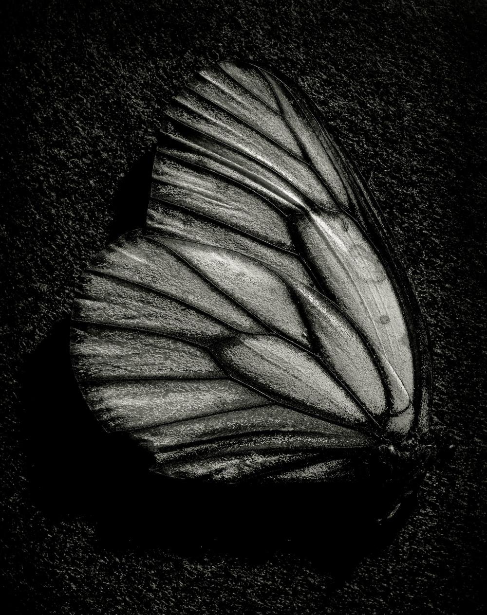 Butterfly002-Edit.jpg