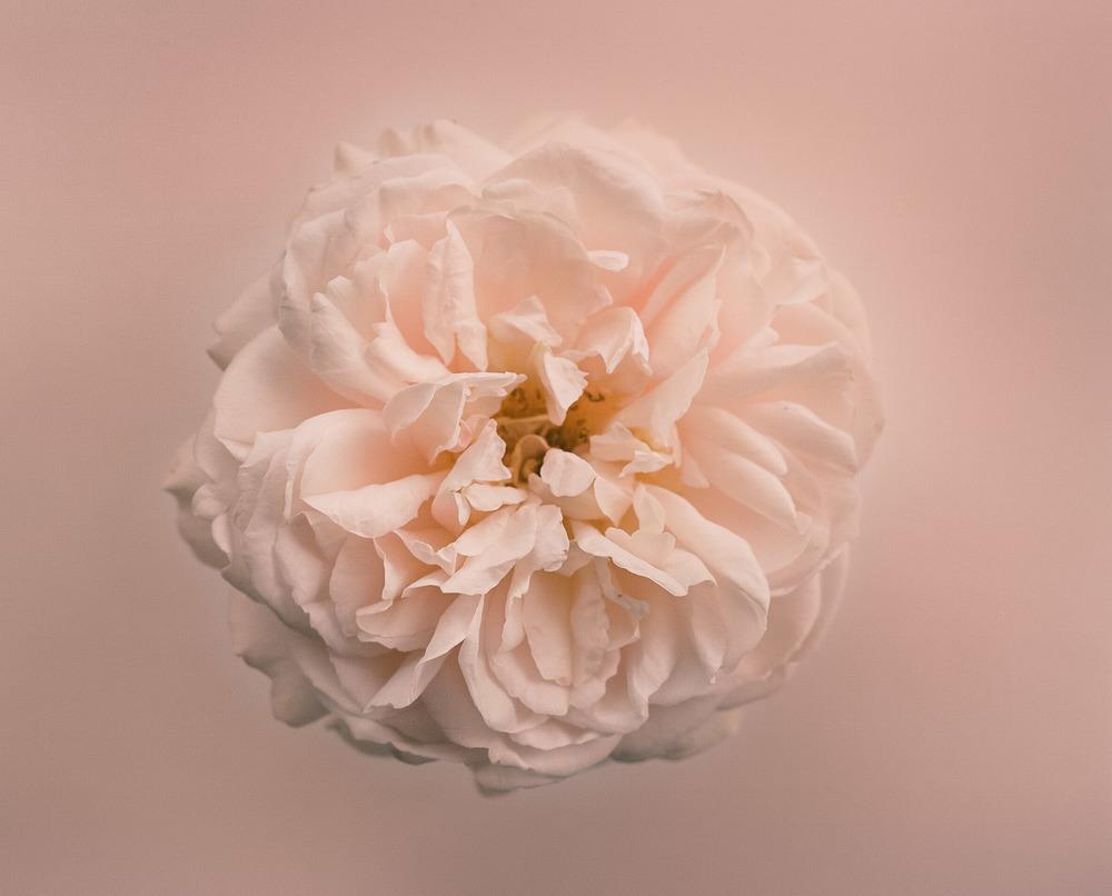 Casey Moore Flowers-95620004.jpg
