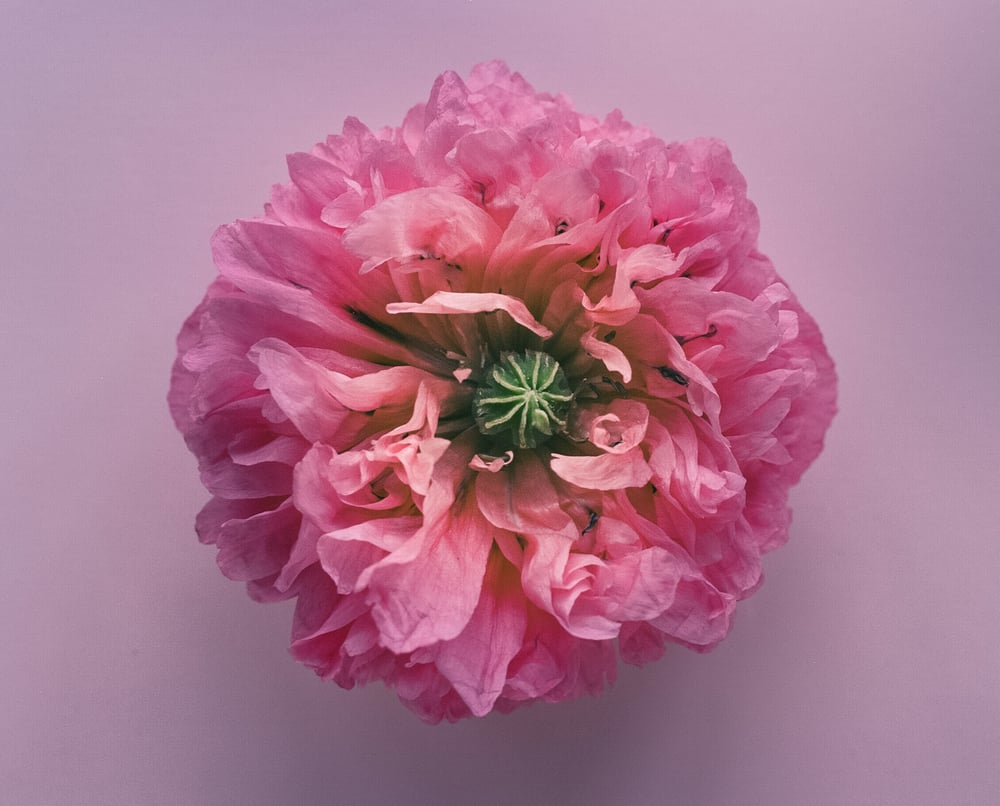 03730003-Casey Moore Flowers.jpg