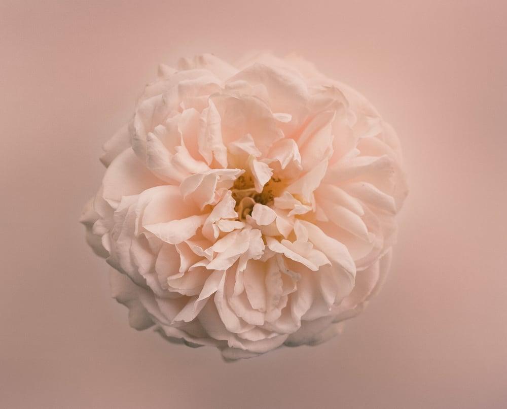 95620004-Casey Moore Flowers.jpg