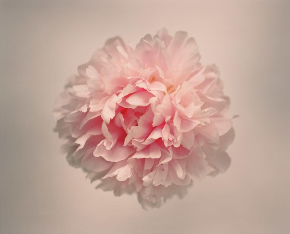 10680001-Casey Moore Flowers.jpg