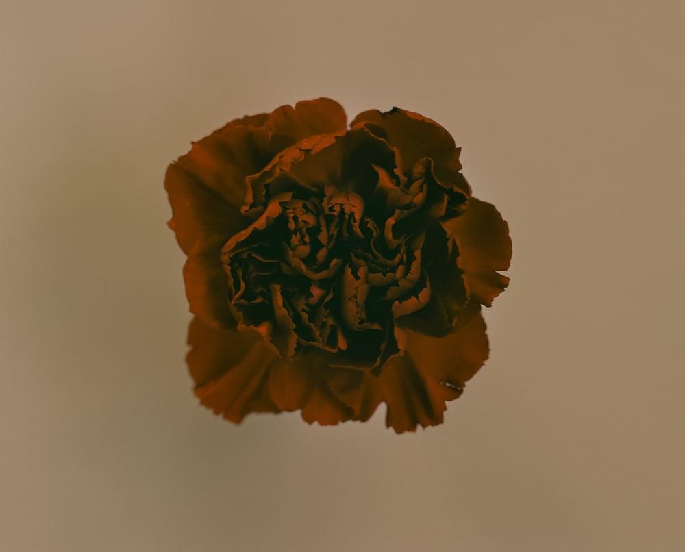 casey moore flower print-5.jpg