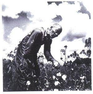 Picking cotton...