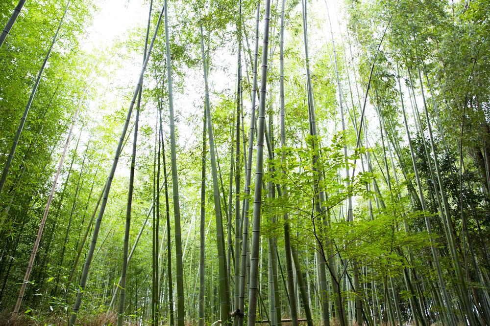 PERRU_P_JAPAN_01_45.jpg