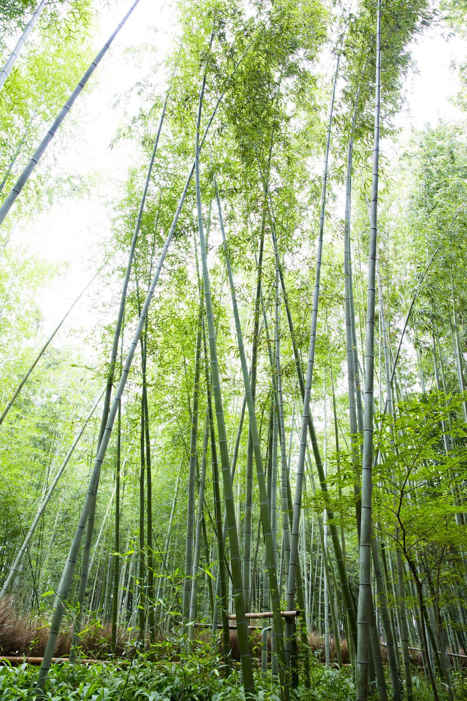 PERRU_P_JAPAN_01_46.jpg