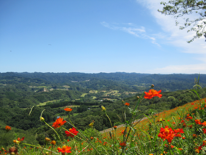 View from a farm in Chiba