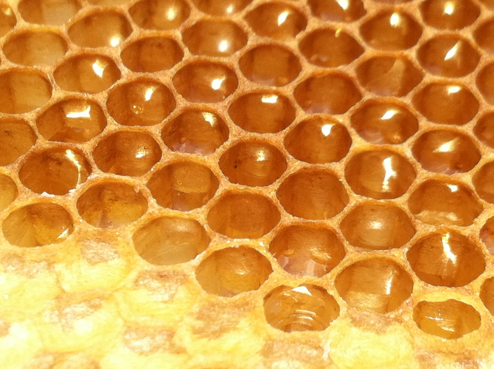 Honey comb from our harvest this fall, 2014