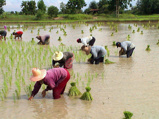 Farming in the home province of Jongsanan.