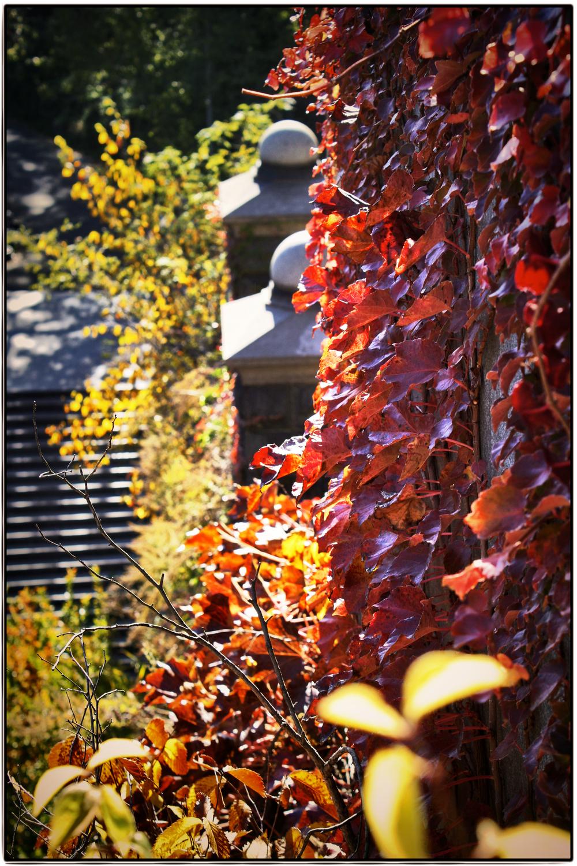 autumn5.1.jpg