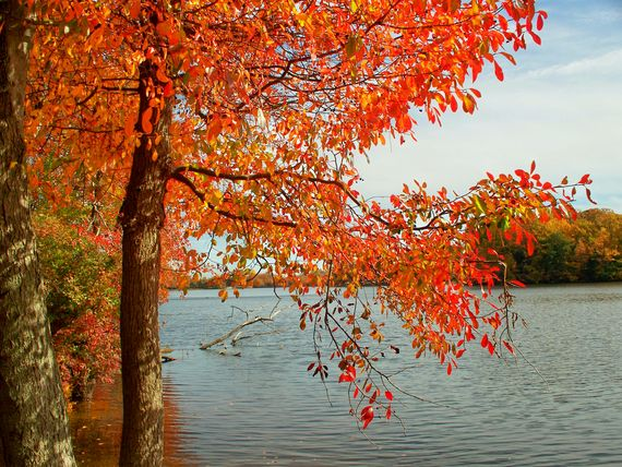 autumn_pond2.jpg