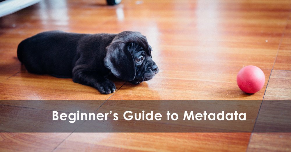A beginner's guide to photo metadata