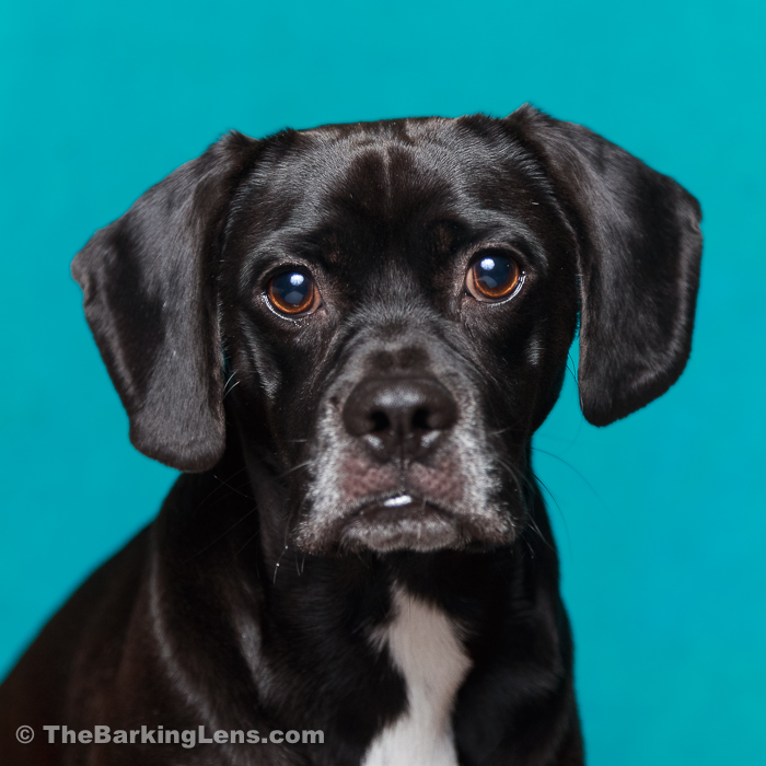 Dog-Headshots-WEB-2.jpg
