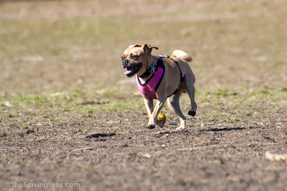 Maia running in Astoria Park