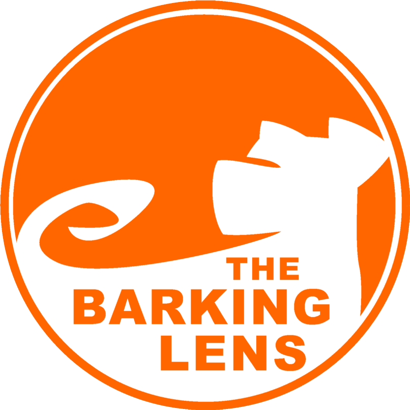 The Barking Lens