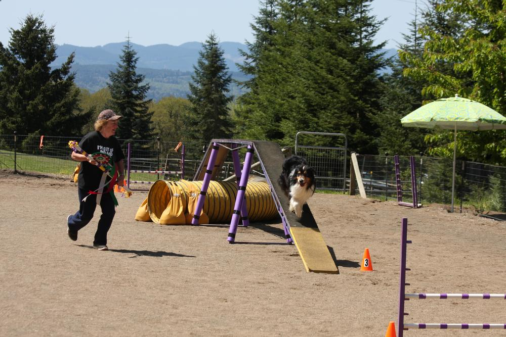 Our victory lap-  agility photos courtesy of Barb Riebold taken in Yamhill Oregon 2012