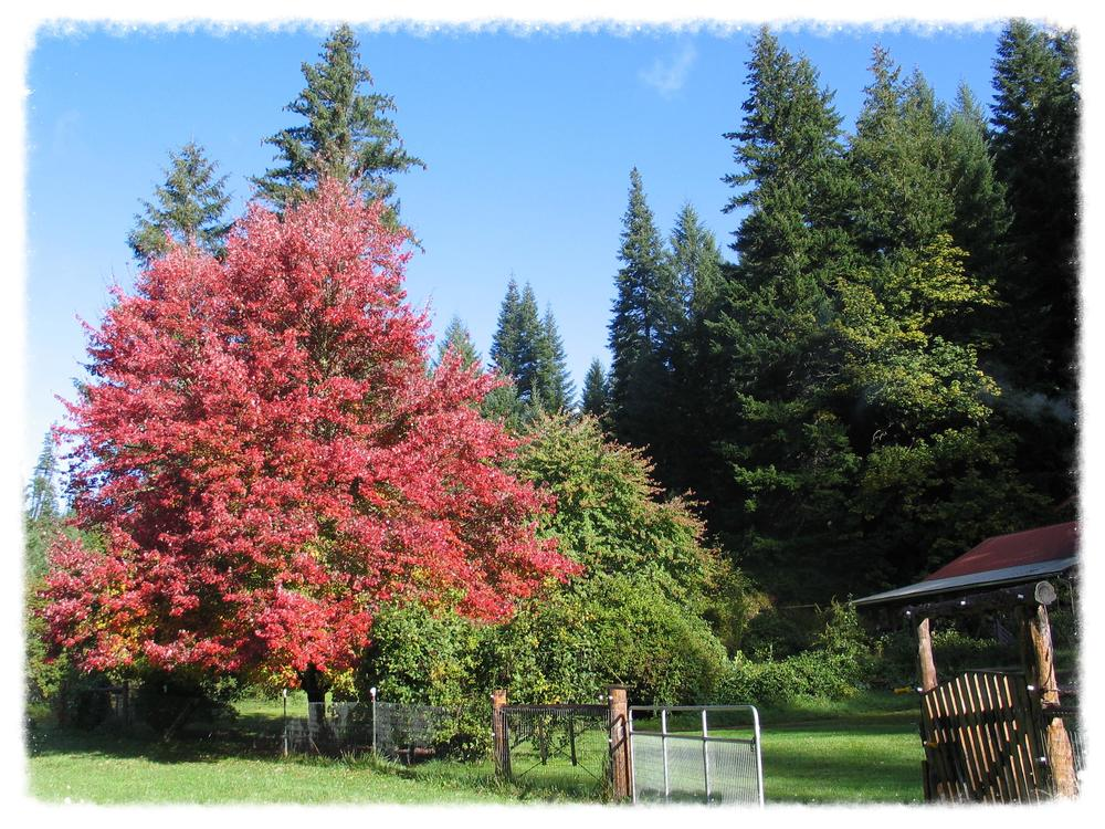 Early autumn on our ranch in the Cascades of southern Oregon