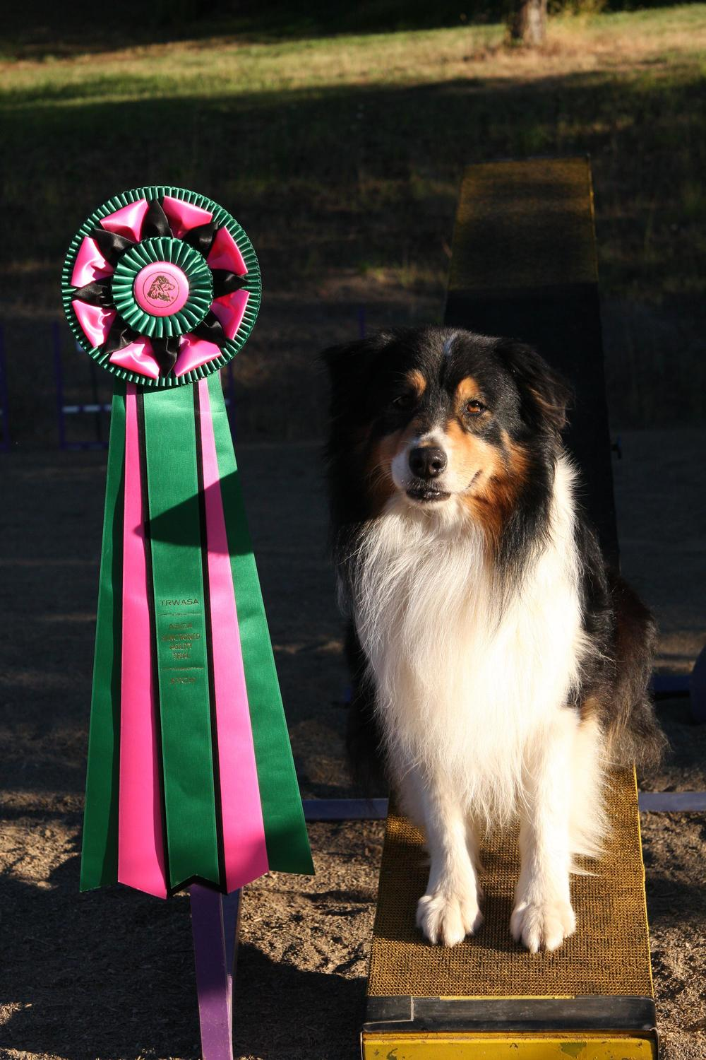 Cruiser  - ATCH 4 Crystal Canyon's Cruisin On ATDd,OTDsc gave us 4 HOF points - all three stock titles plus the agility title. He also has contributed 5 titles towards HOFX