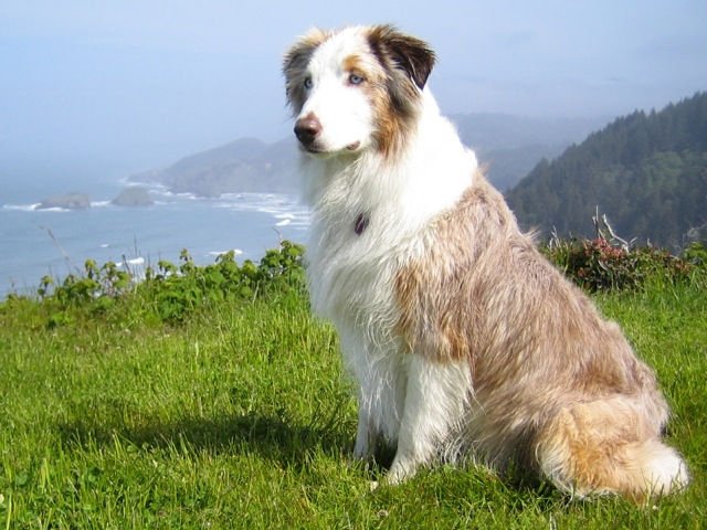 Wiley at Cape Ferrello on the Oregon coast. Wiley and Steve enjoy hiking, mushroom hunting and fishing and live in Medford so I get to visit with Wiley fairly often.