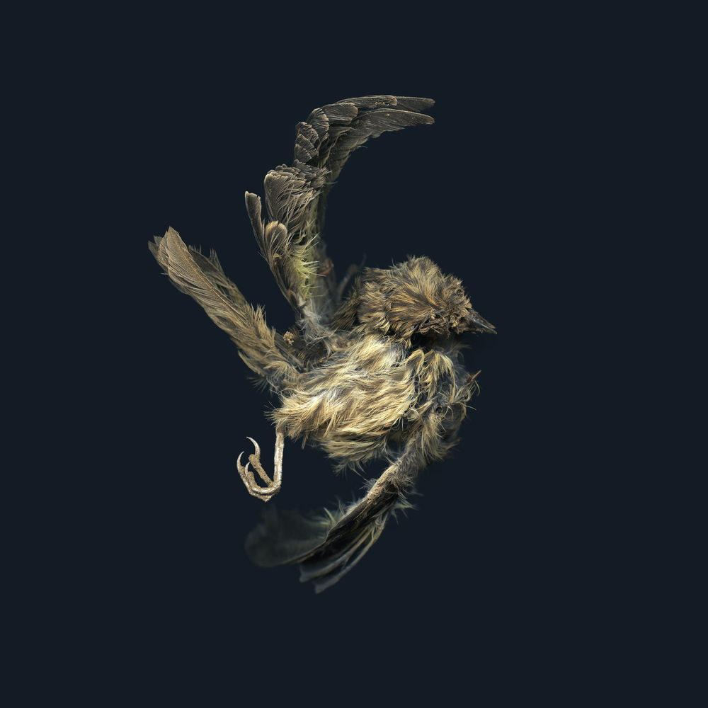 ThompsonJ_BirdCircle.jpg