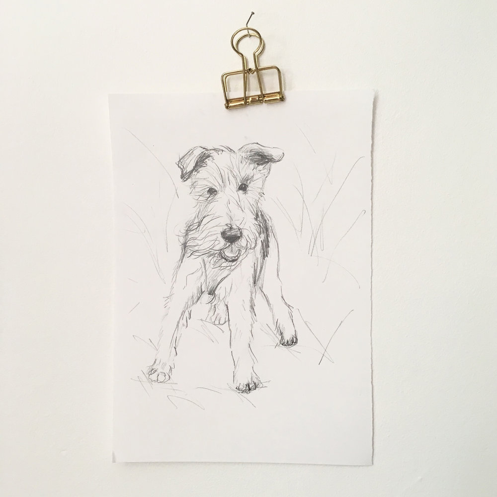 pet portrait sketch.jpg