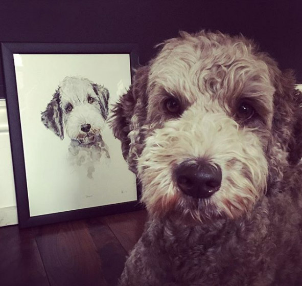 Chewie the Australian labradoodle with his newly framed portrait. Photo from his owner Lauren.