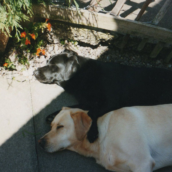 Tess & Bo, our dogs. They came from the same litter and always had to be together, and were always touching when they were asleep.