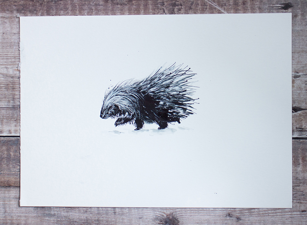 porcupine illustration.jpg