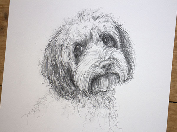 pencil pet portrait .jpg