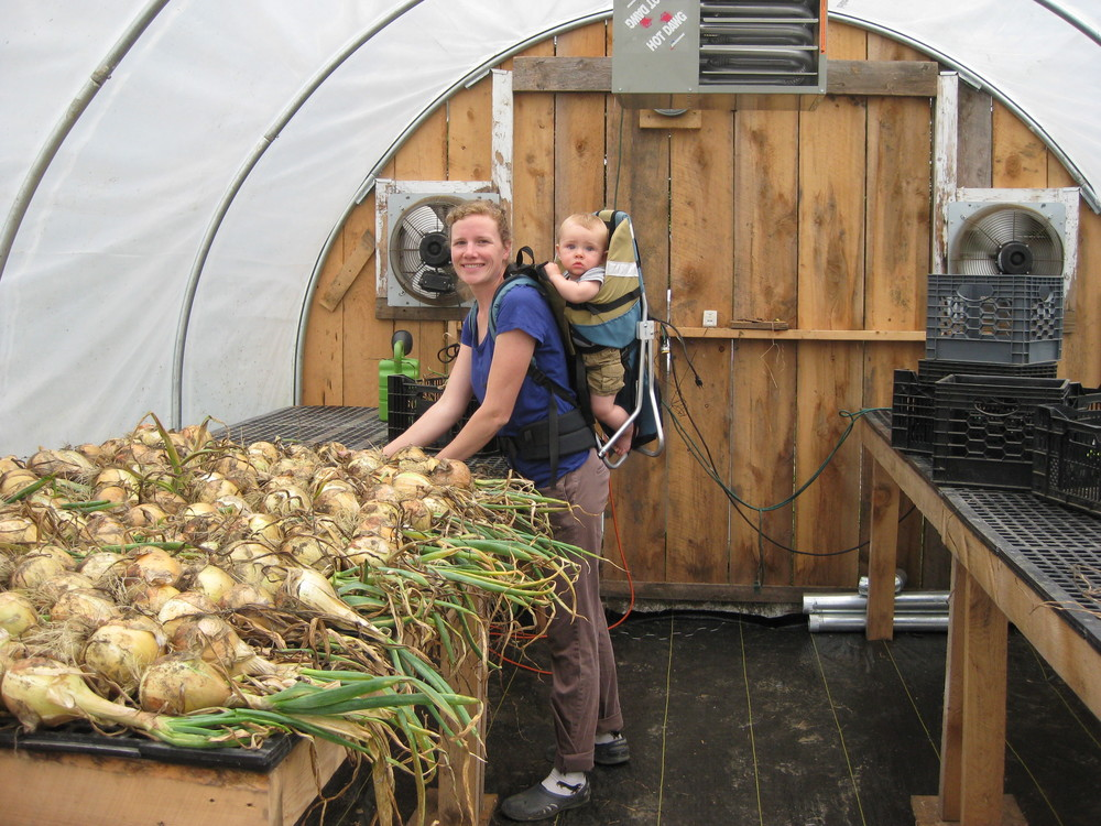 Megan and Bruce laying onions out to cure in the greenhouse