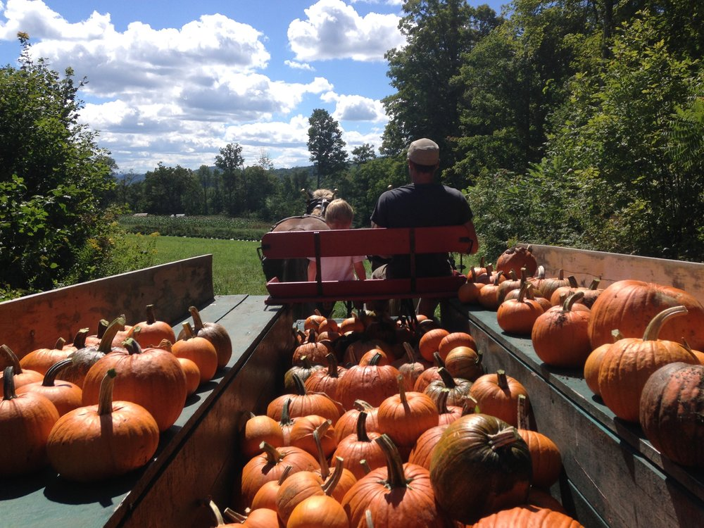 Derek, Bruce and horses bringing back a haul of pumpkins in late summer