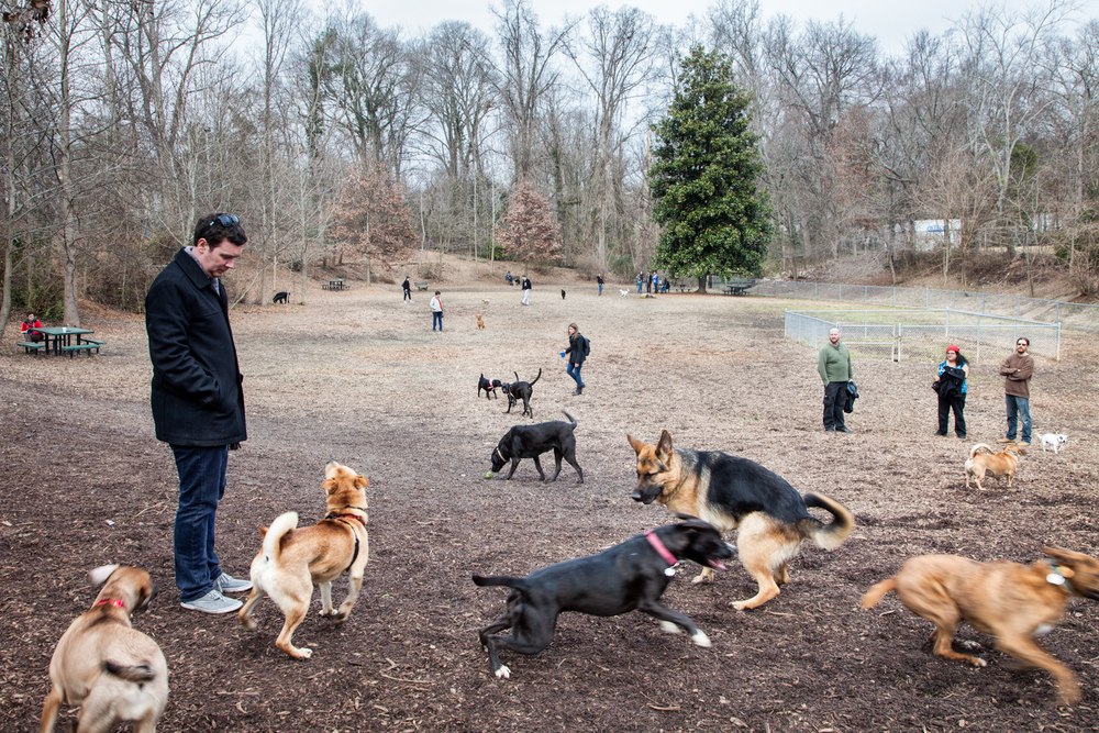 Dog Park, 2014, Decatur