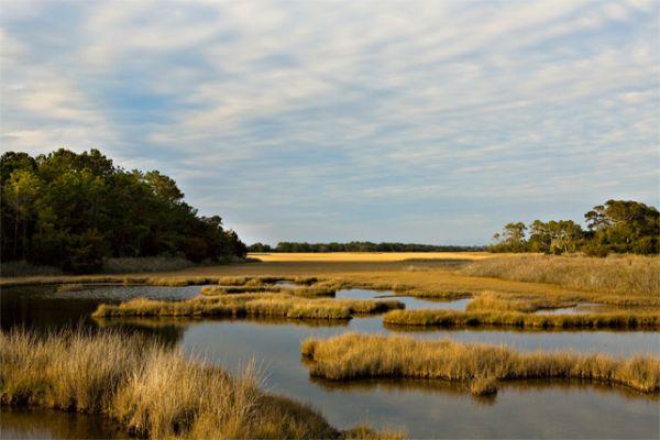 wet land2.jpg