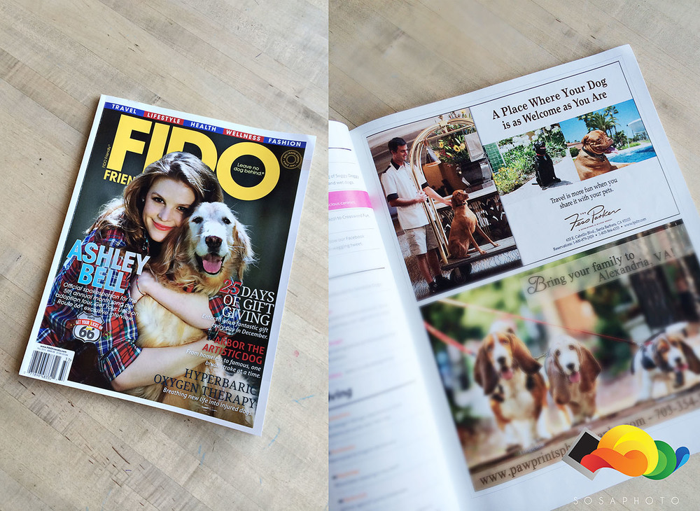 Published in Fido Magazine