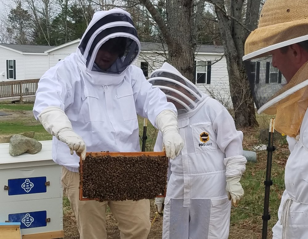 SSIA Bees3.jpg