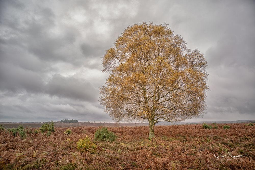 20141116-Rockford Common.JPG