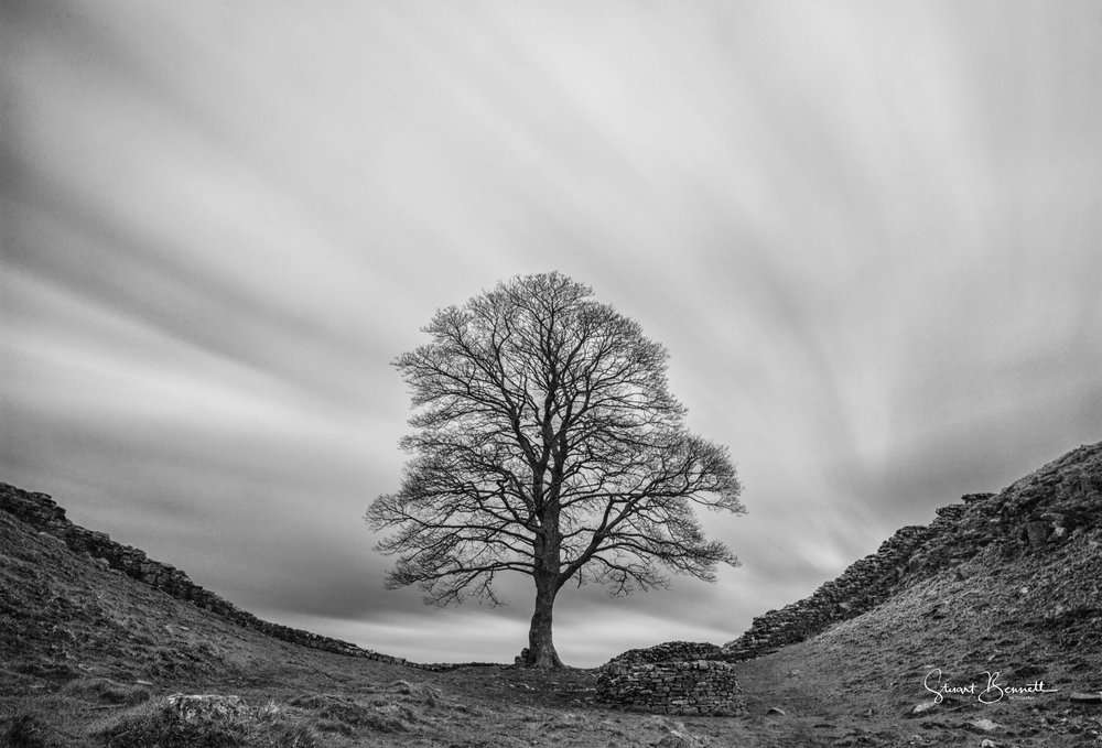 20160404-Sycamore Gap Black and WHite.JPG
