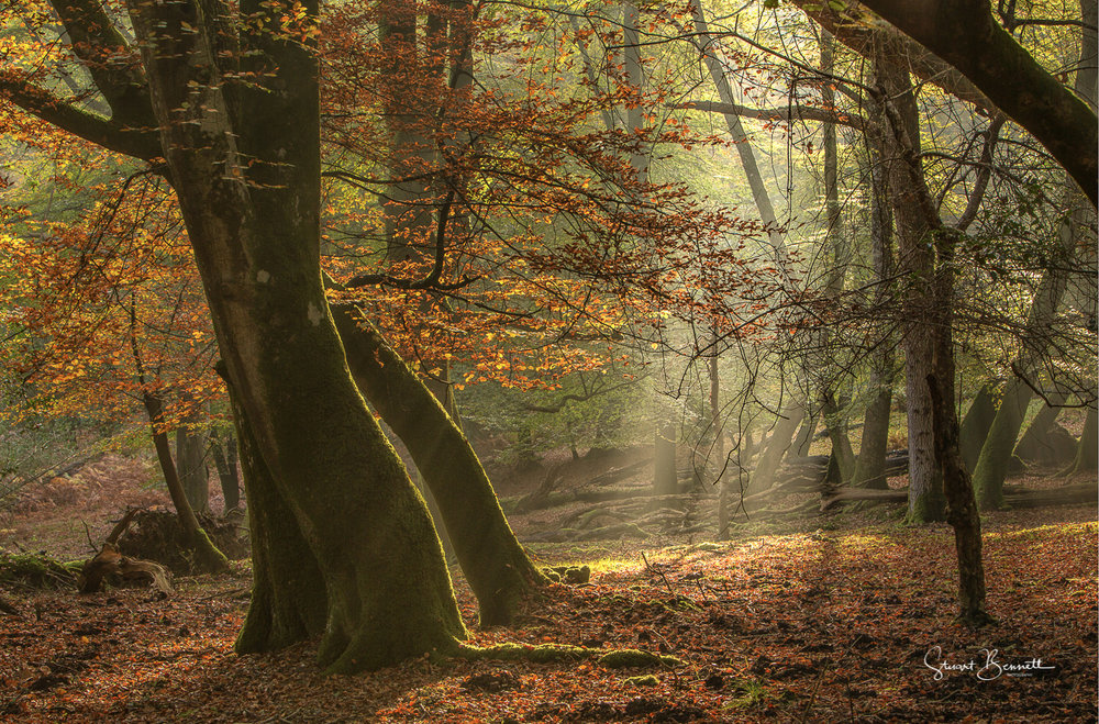 New Forest Autumn.JPG