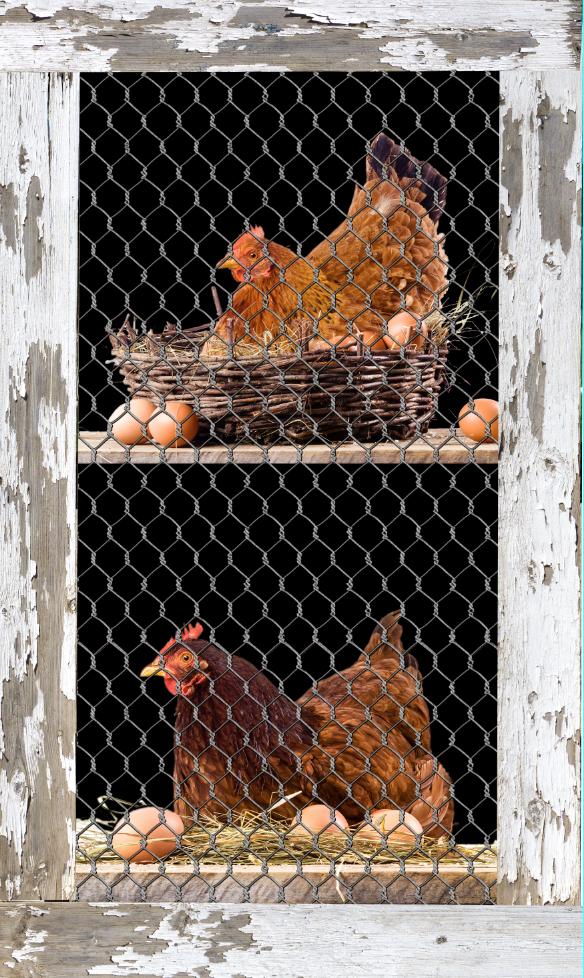 Chicken Coop Mini Fridge Wrap