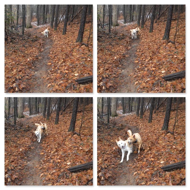 Pups Running 2.jpg