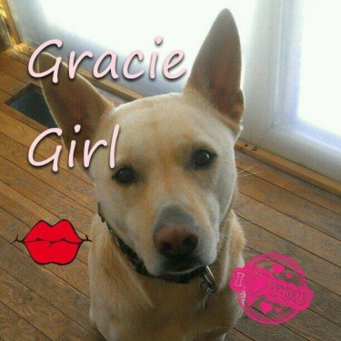 Gracie.jpg