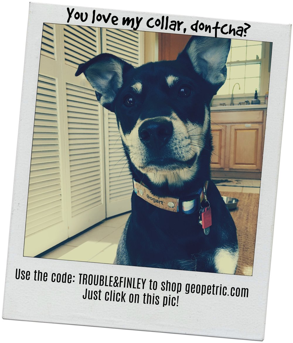 Geopetric Collars are charitable and cruelty-free! Seriously. Use the code TROUBLE&FINLEY for 10% off.
