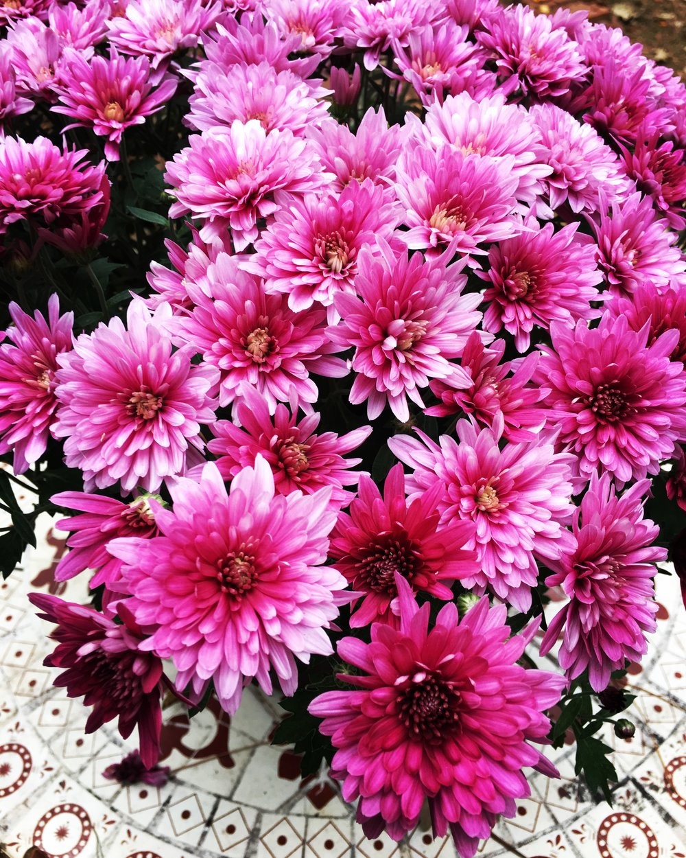 Okay, it took me weeks to post this because I keep going back to it. I needed it to have a happy ending or at least a moral. But, oh, wait. That's what this blog is about; it's about me not needing to supplement everything with goodness. Instead, here is a picture I took of some mums.