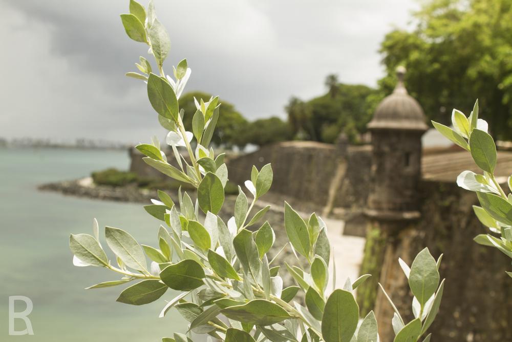 SITE-Puerto Rico-50.jpg