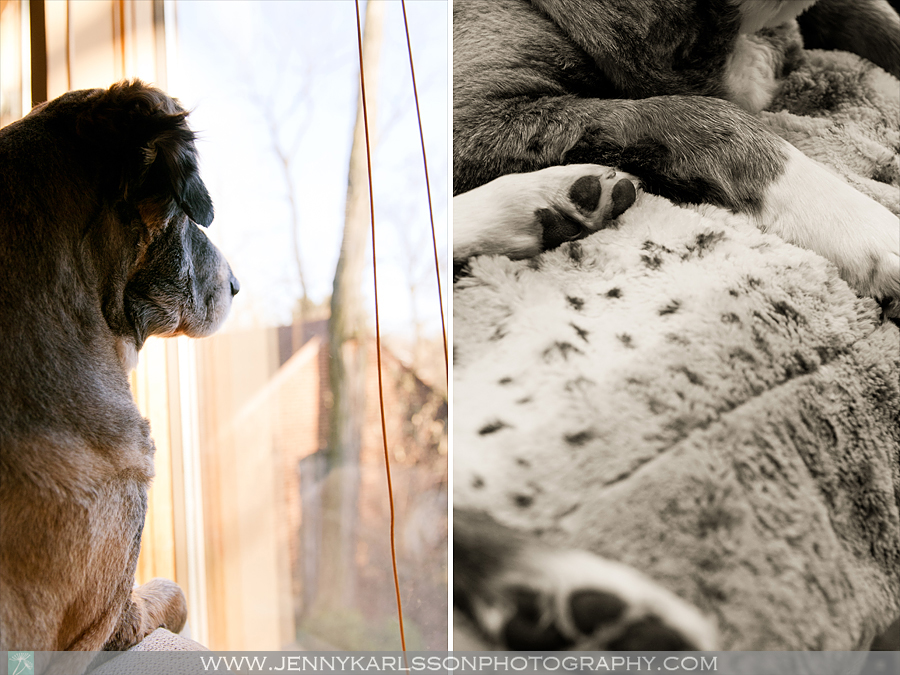Betsy - Pittsburgh Pet Photography 7