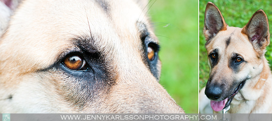 Alice | Pittsburgh Pet Photography by Jenny Karlsson