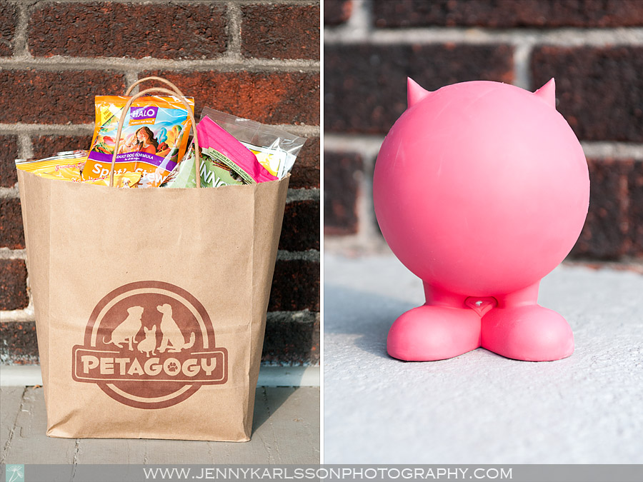 Petagogy | Pittsburgh Pet Photography by Jenny Karlsson