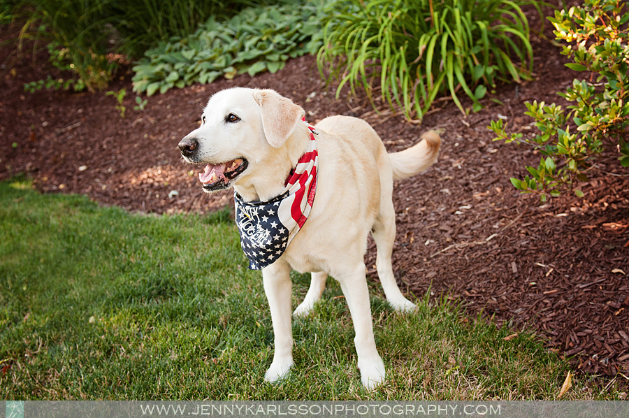 Tucson - Pittsburgh Dog Photography by Jenny Karlsson 1